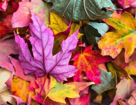 Autumnal Anticipation